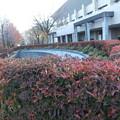 写真: ドウダンツツジの紅葉