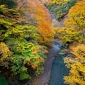 写真: 森閑たる繁華