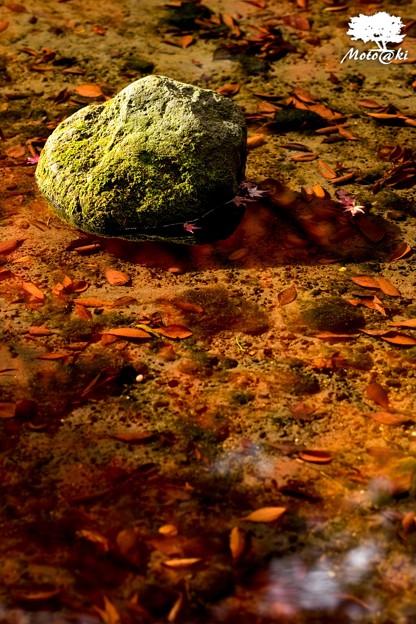 Photos: 岩陰に燃ゆる秋