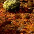 写真: 岩陰に燃ゆる秋