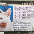 Photos: にゃーにゃ3