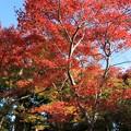 写真: IMG_7726宝筐院・いろは紅葉