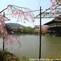 Photos: IMG_3265平安神宮・東神苑