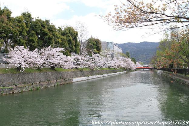IMG_3363琵琶湖疎水
