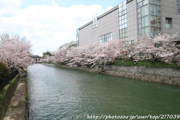 IMG_3401琵琶湖疎水