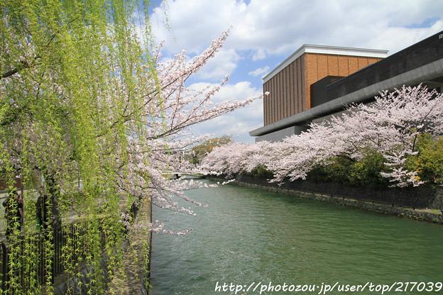 IMG_3425琵琶湖疎水・柳と染井吉野