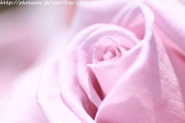 IMG_5038薔薇(ブルー シャトー)