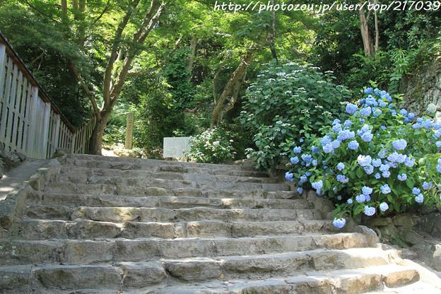 IMG_5439矢田寺