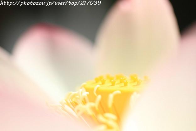 IMG_5886蓮