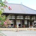 IMG_6599萩と金堂(国宝)