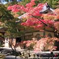 写真: IMG_7244永源寺・法堂といろは紅葉