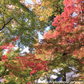 写真: IMG_7248永源寺・いろは紅葉
