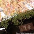 写真: IMG_7251永源寺・いろは紅葉