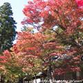 写真: IMG_7261永源寺・いろは紅葉
