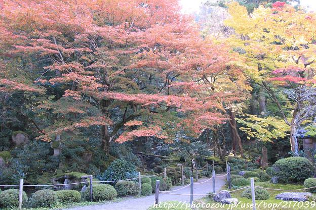 IMG_7338金剛輪寺(松尾寺)・明壽院庭園・いろは紅葉