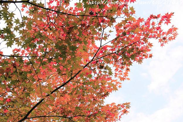 IMG_7359金剛輪寺(松尾寺)・明壽院庭園・いろは紅葉