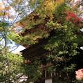 写真: IMG_7541西明寺・いろは紅葉と三重塔(国宝)