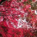 写真: IMG_7552西明寺・いろは紅葉