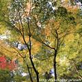 写真: IMG_7554西明寺・いろは紅葉