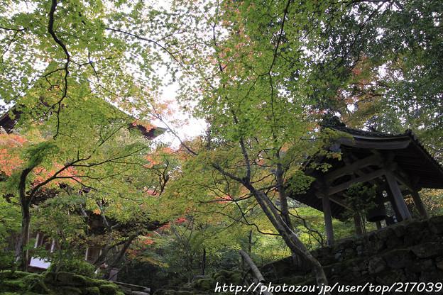 IMG_7559西明寺・いろは紅葉と鐘楼と三重塔(国宝)