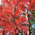 写真: IMG_7621西明寺・いろは紅葉