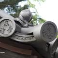高台寺 勅使門 P5010574