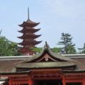 写真: 厳島神社 IMG_1018
