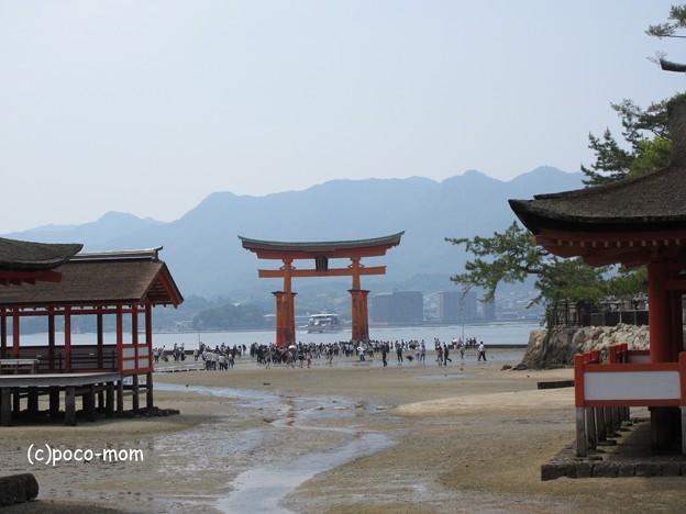 写真: 厳島神社 IMG_0994