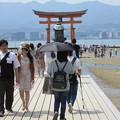 写真: 厳島神社 IMG_1019