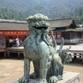 写真: 厳島神社の狛犬 IMG_1021