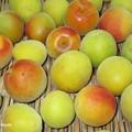 写真: 梅を洗う IMG_1199