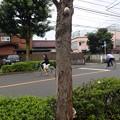 写真: サルノコシカケ P8031271