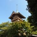 写真: 大雲院祇園閣 P9241279