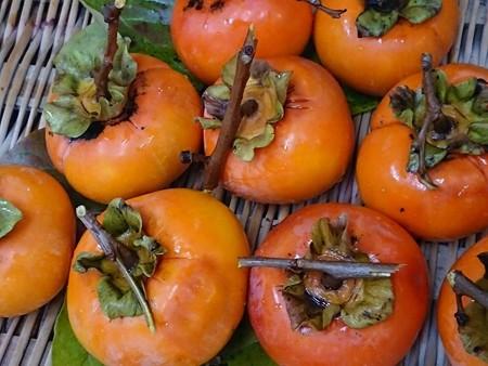 干し柿甘柿