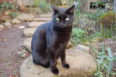 黒猫 グーグー