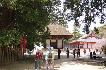 2011年04月17日_DSC_0091観心寺建掛塔と本堂