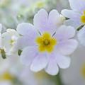 愛らしい花