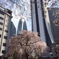 写真: 都会の春