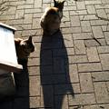 猫撮り散歩1725