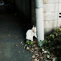 猫撮り散歩1751