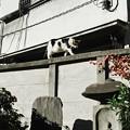 猫撮り散歩1753
