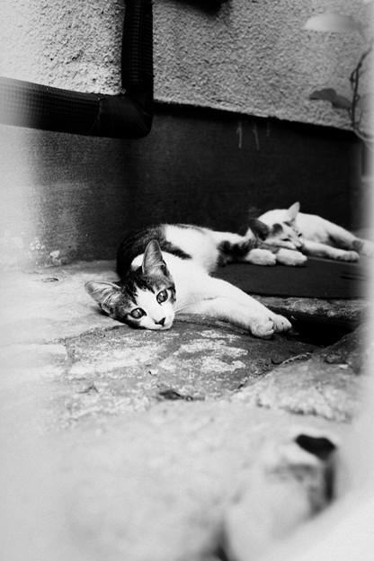 猫撮り散歩1885