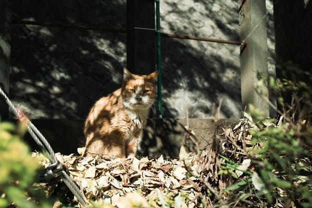 写真: 猫撮り散歩1927