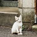 写真: 猫撮り散歩1934