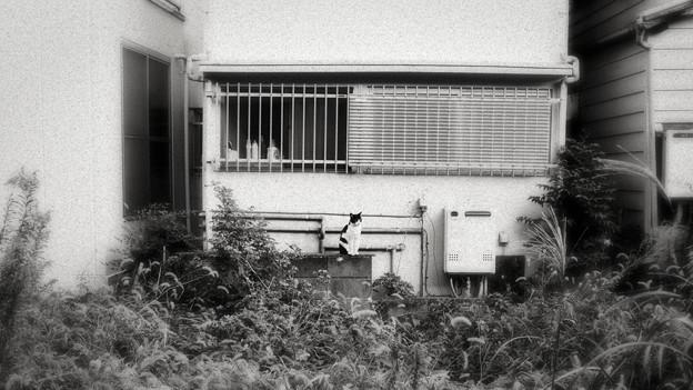 猫撮り散歩1977