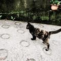 写真: 猫撮り散歩1979