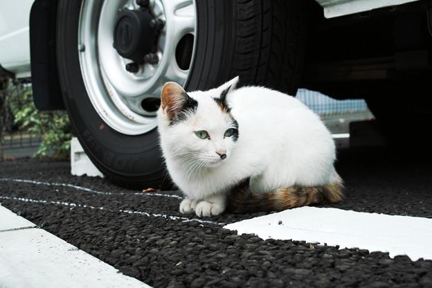 写真: 猫撮り散歩1983