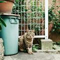 写真: 猫撮り散歩1989