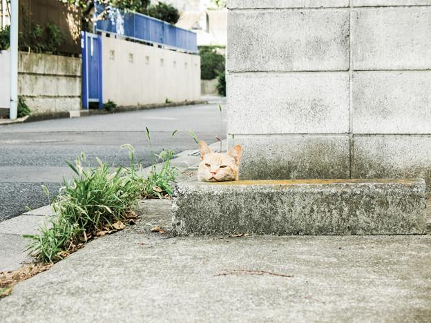 猫撮り散歩1991