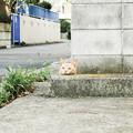 写真: 猫撮り散歩1991